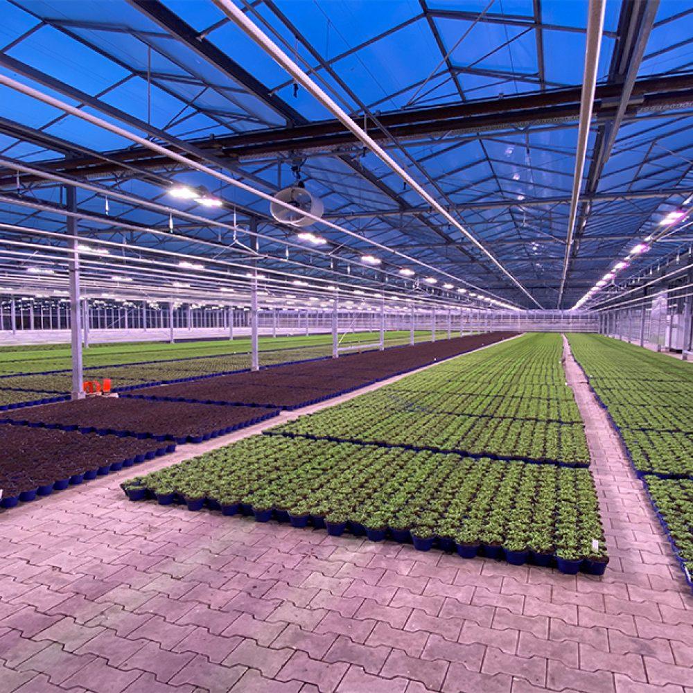 led kweeklampen voor de tuinbouw